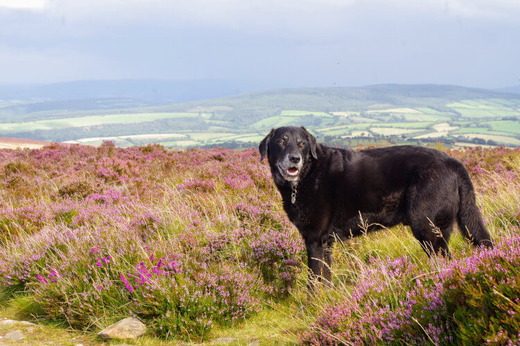 Explore dog-friendly Exmoor