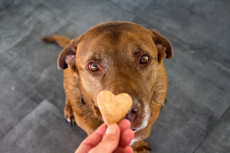 Treat your dog