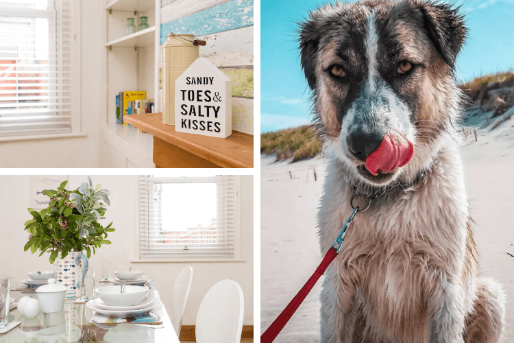 Barrie the Anatolian Shepherd licks her chops at the thought of staying in this contemporary beach hut