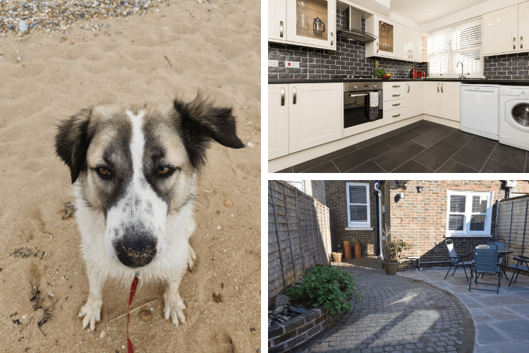 An enclosed garden and a fully equipped kitchen - perfect for curious and hungry dogs