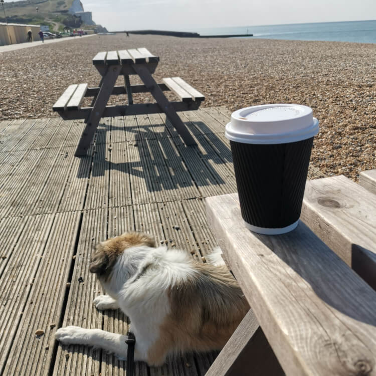 A dog relaxes on a pebble beach whilst her owner grabs a drink