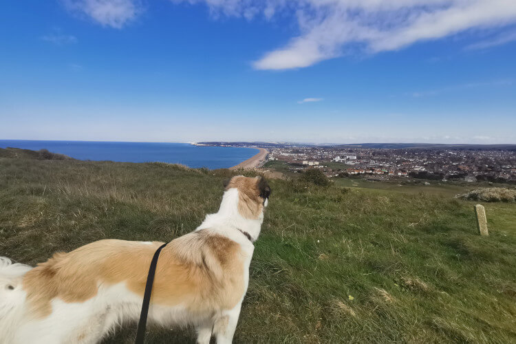 Barrie stands on the clifftop overlooking the sea