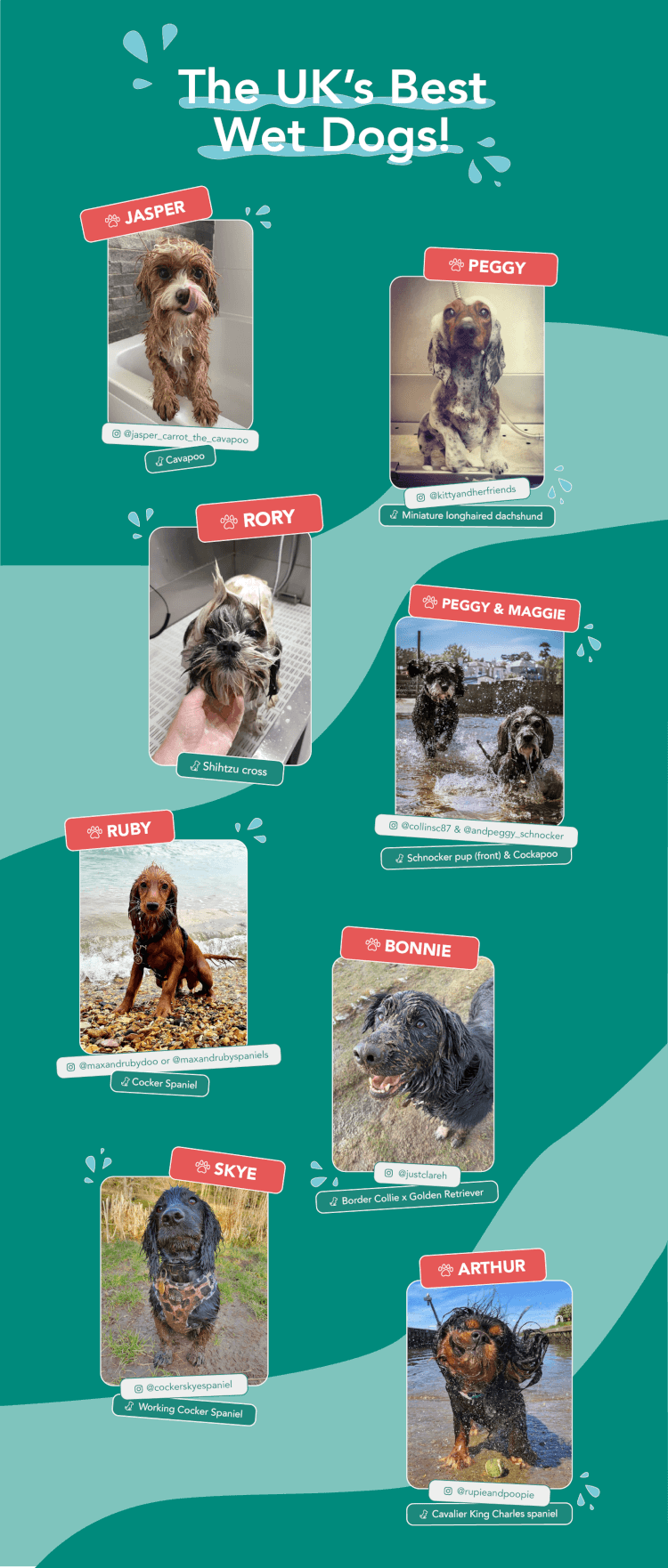 The top 8 finalists in the wet dog competition