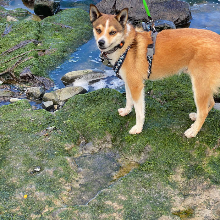 Talyn next to a dinosaur footprint