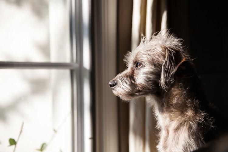 5 ways to help your dog with separation anxiety after lockdown