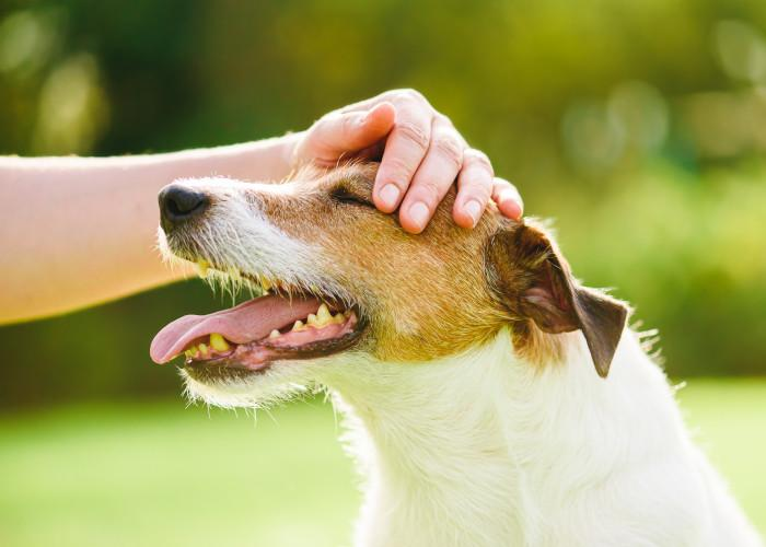 3 Regulate skin-to-skin contact