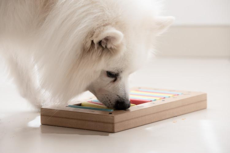 5 Buy your dog some puzzles and treats
