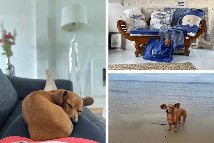 Dog-friendly shops and beaches