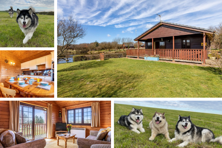 Spacious outside and bright inside at Sky Lark Lodge