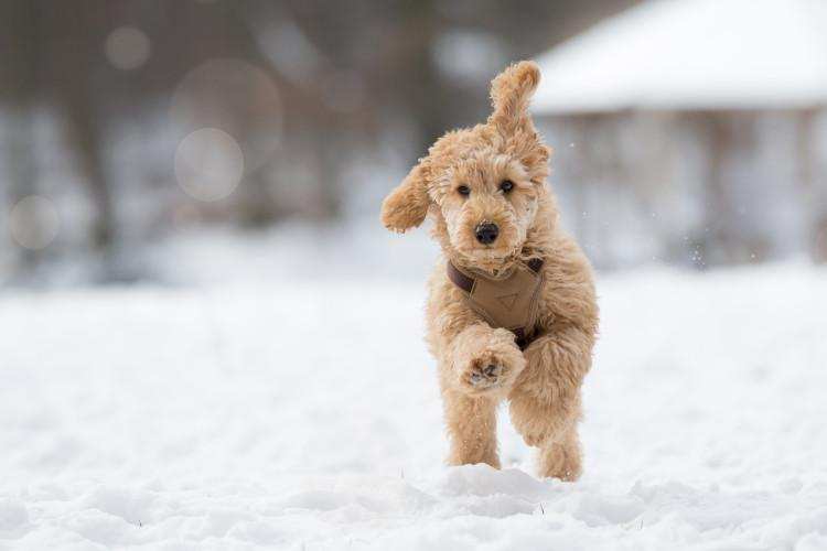 Winter walking tips for dogs