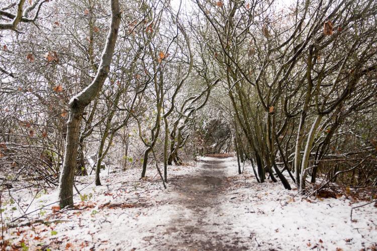 Devon | Tarka Trail, Bideford and Great Torrington