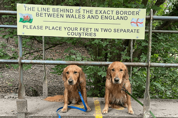 One dog in England, one dog in Wales