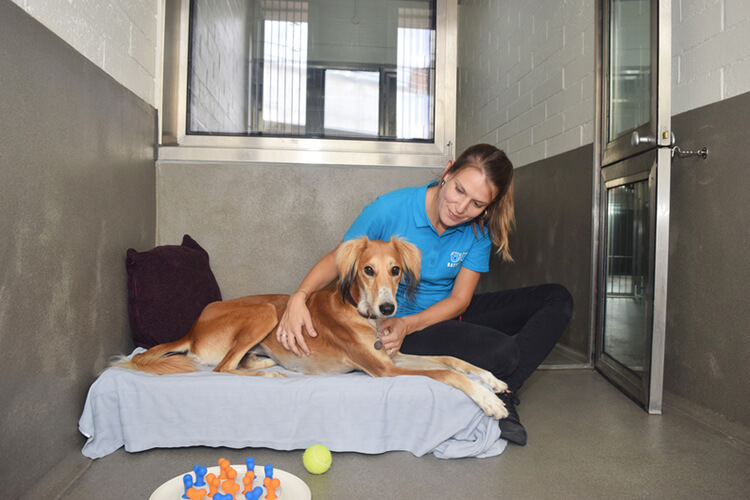 Settling a dog in at Battersea