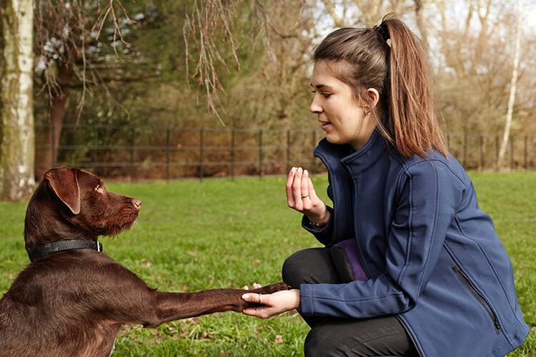 Dog training in the garden