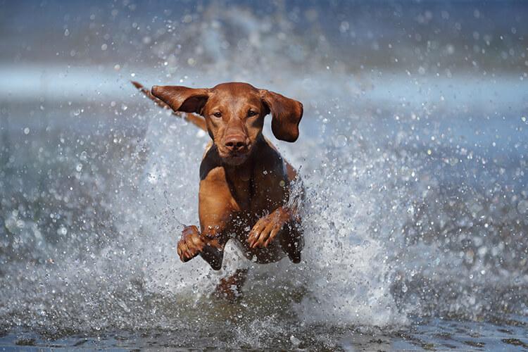 Dog splashing in the water