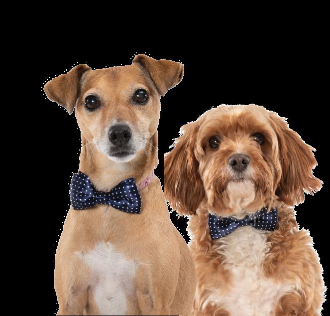 Canine Critics 2021 dogs