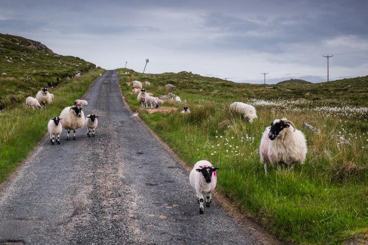 Visit Scotland in Spring