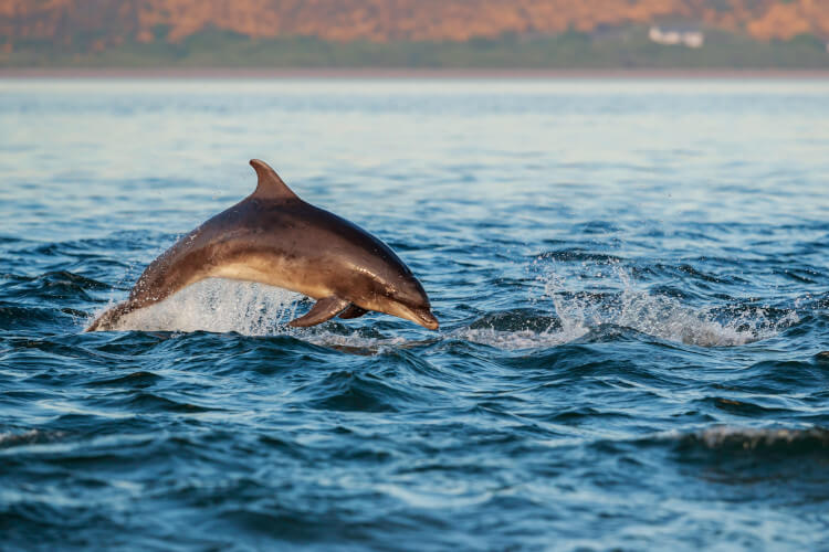 Keep an eye out for friendly dolphins who will also be searcing for their food