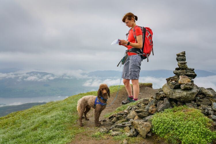 Take on some great dog walks in Scotland