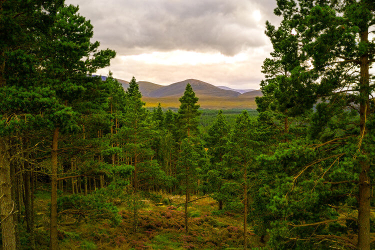 The Cairngorms National Park, Scotland
