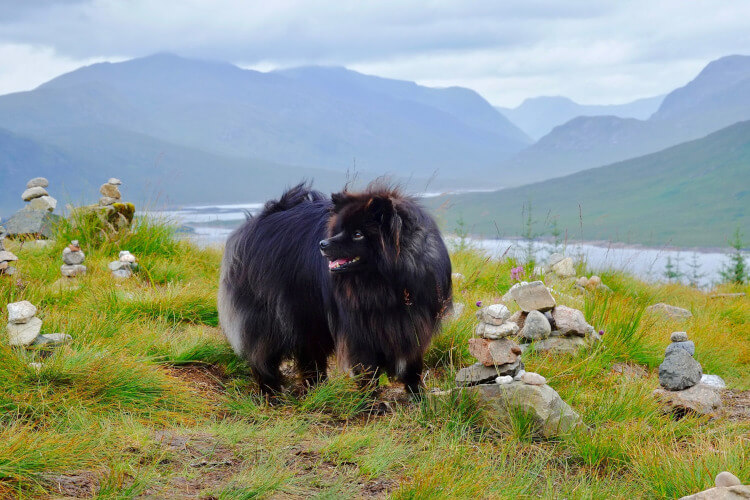Let your dog enjoy an adventurous holiday in Scotland