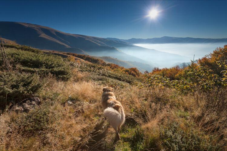 Enjoy dog-friendly breaks in the Highlands