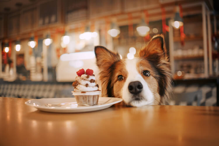 Dog-friendly cafes offer a nice place for all to enjoy a cake