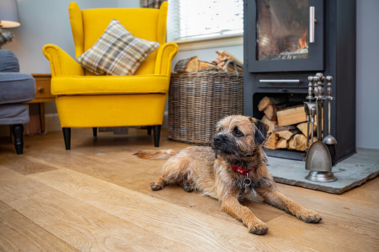 Let your dog relax in some of the best dog-friendly accommodation in Scotland.