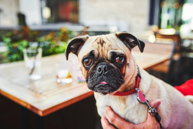 There are plenty of dog-friendly cafes in Northumberland