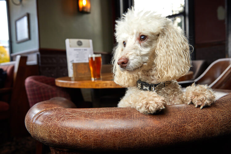 Find a dog-friendly pub so they can be comy too!