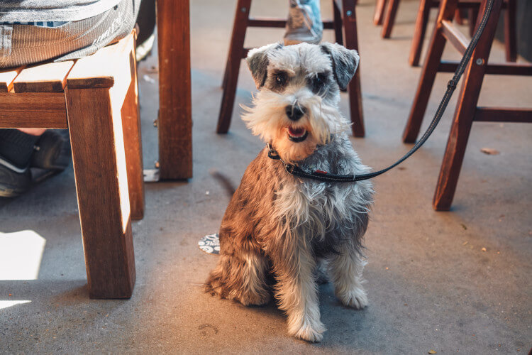 Let them join in the fun when eating out in a dog-friendly establishment