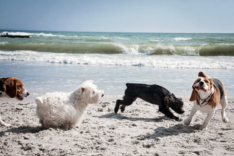 Explore dog-friendly beaches in Northumberland