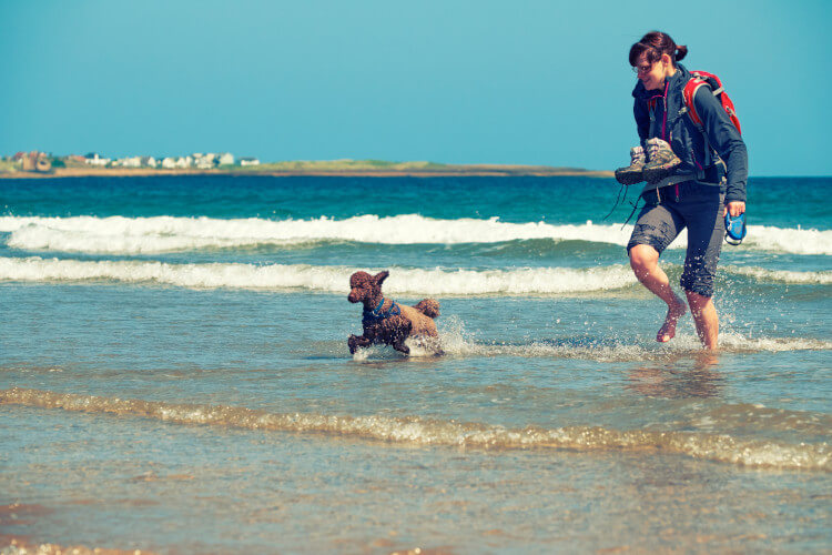Take the dogs to play on Northumberlands best beaches