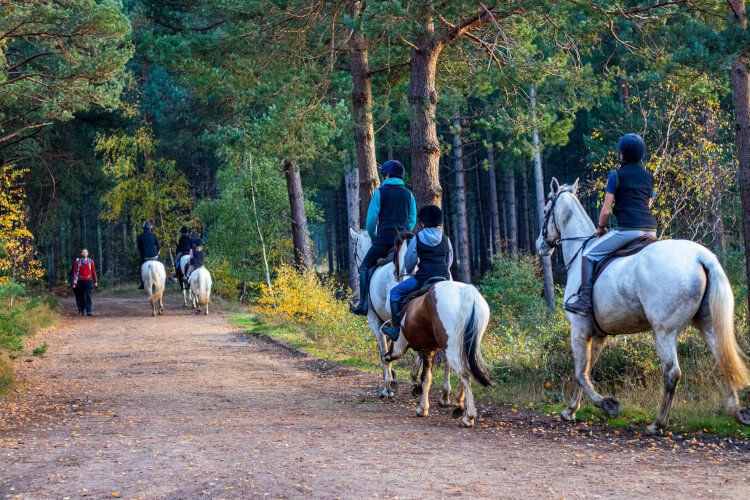 Plan a horse riding adventure in Northumberland