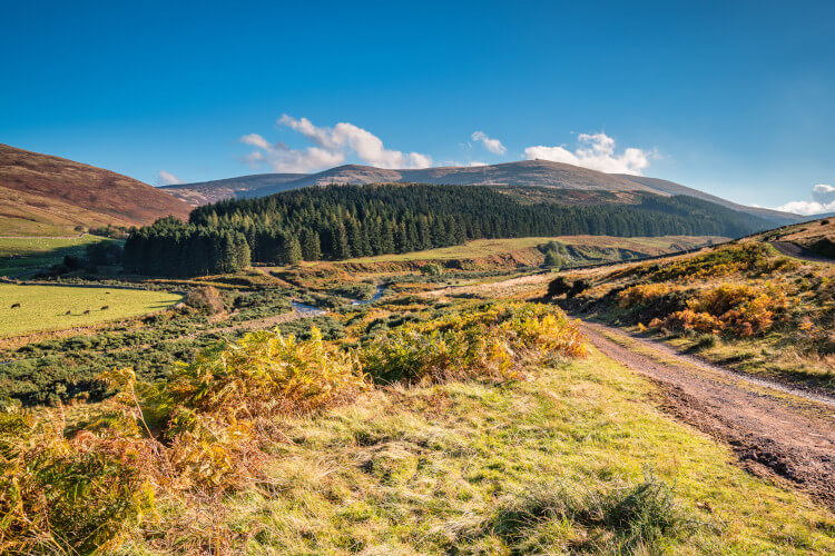 College Valley, near Wooler in Northumberland