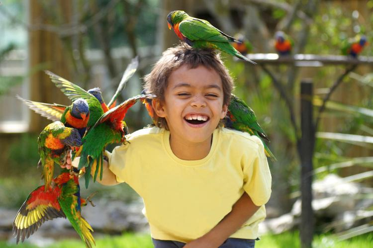 Child with parrots and tropical birds at Drusillas Park in Sussex