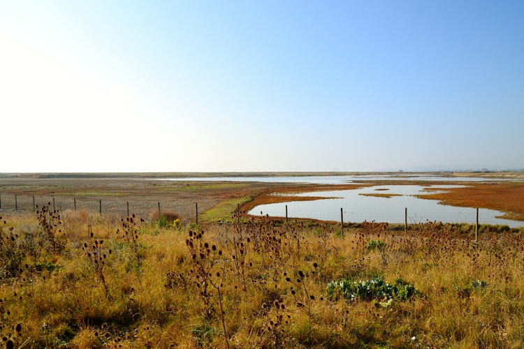 Rye Harbour nature reserve in Kent