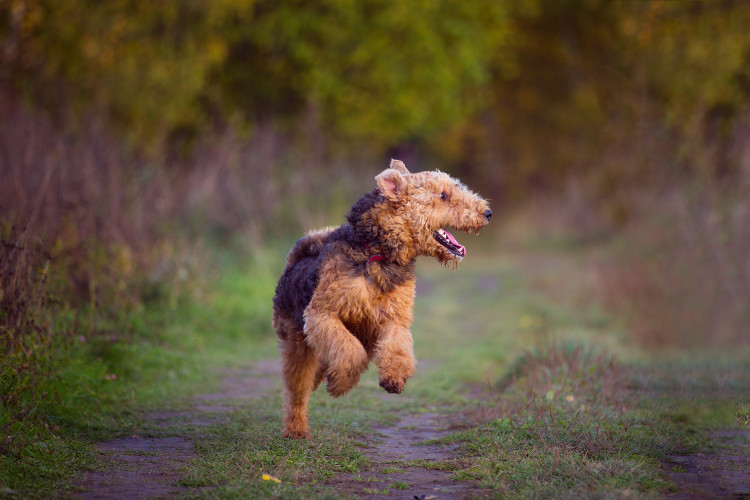 Dog-friendly walks in the New Forest