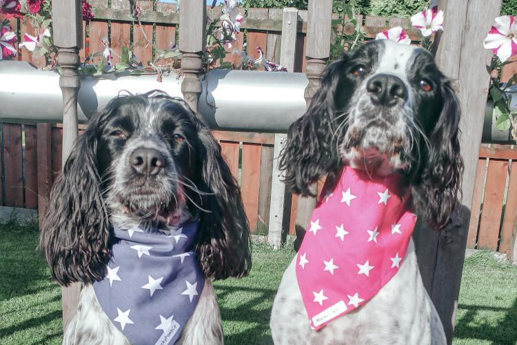 Willow and Bobby with bandanas