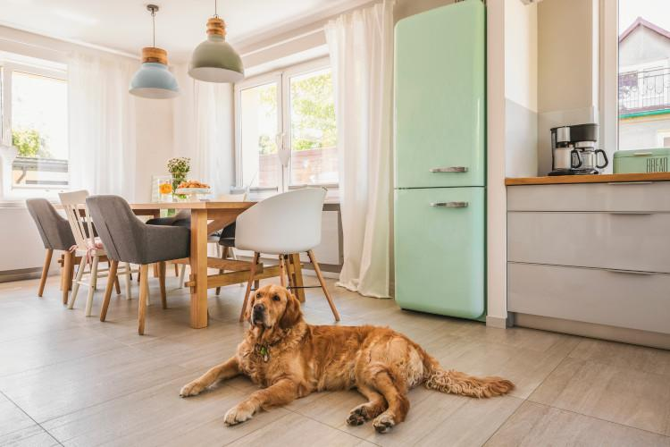 Dog-friendly properties