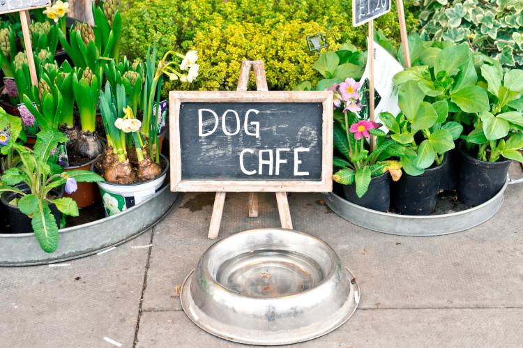 Dog cafe image