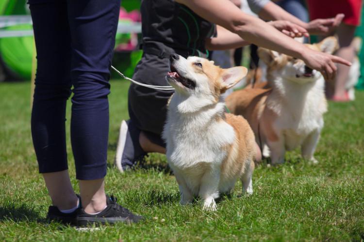 Dog at show