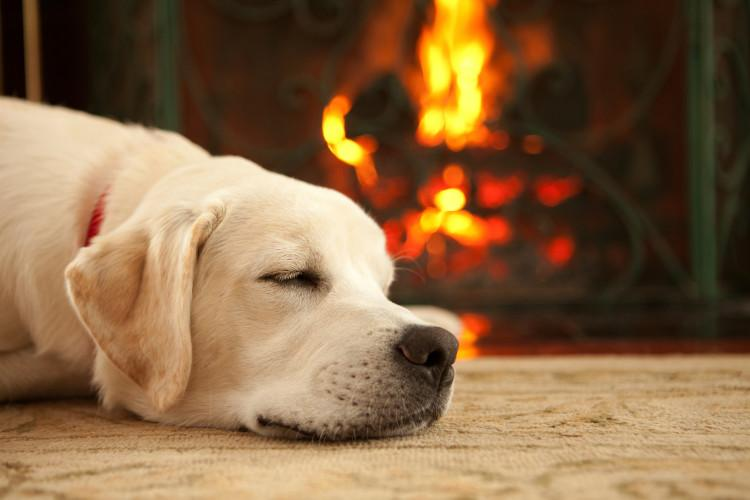 dog sleeping in front of fire