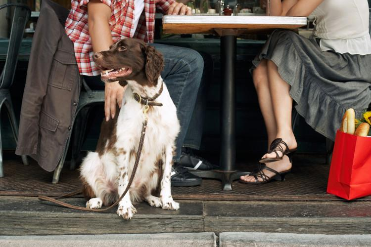 dog sitting outside restaurant with owners