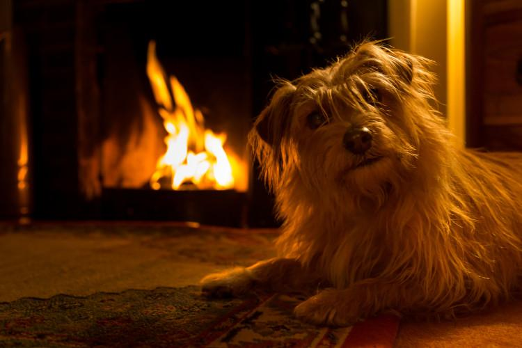 dog and owners by fire
