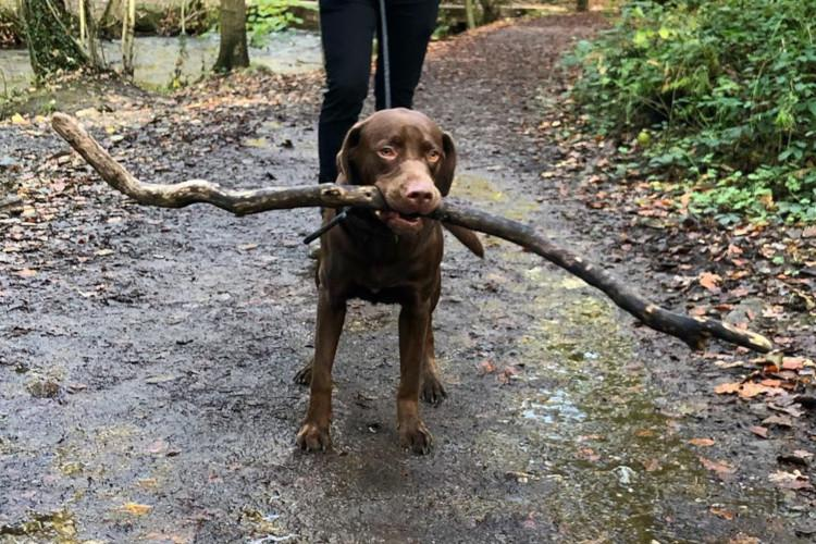 Forge Dam dog with big stick