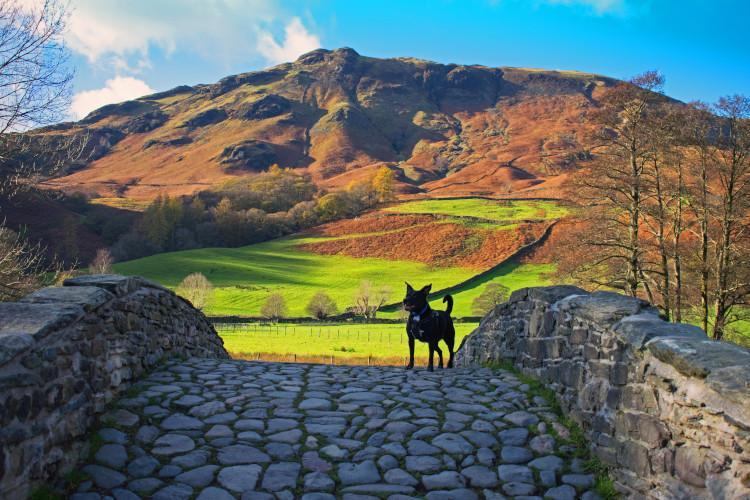 Dog walk in Lake District