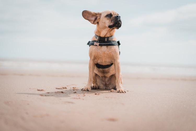 dog sitting on sandy beach