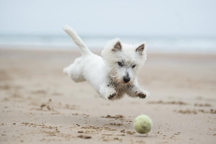 small dog playing with ball on sandy beach