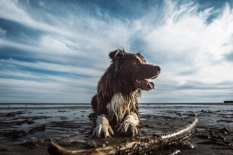 Dog on beach in water with stick